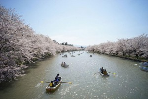 spring-japan-cherry-blossoms-national-geographics-231