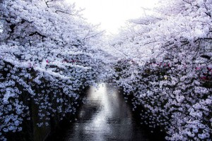 spring-japan-cherry-blossoms-national-geographics-77